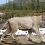 Huge Collection of Giant Cave Lion Fossils Found in Russian Cave
