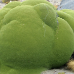Strange Green Blobs Found in Andes Mountains are 3,000 Years Old